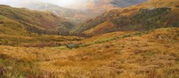 Autumn colours on the lower slopes of the Mamores, near Kinlochleven